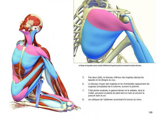 Article de Yoga Yoga Anatomie Les Postures