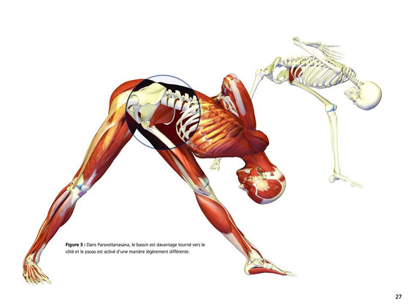 Yoga Anatomie Les Postures